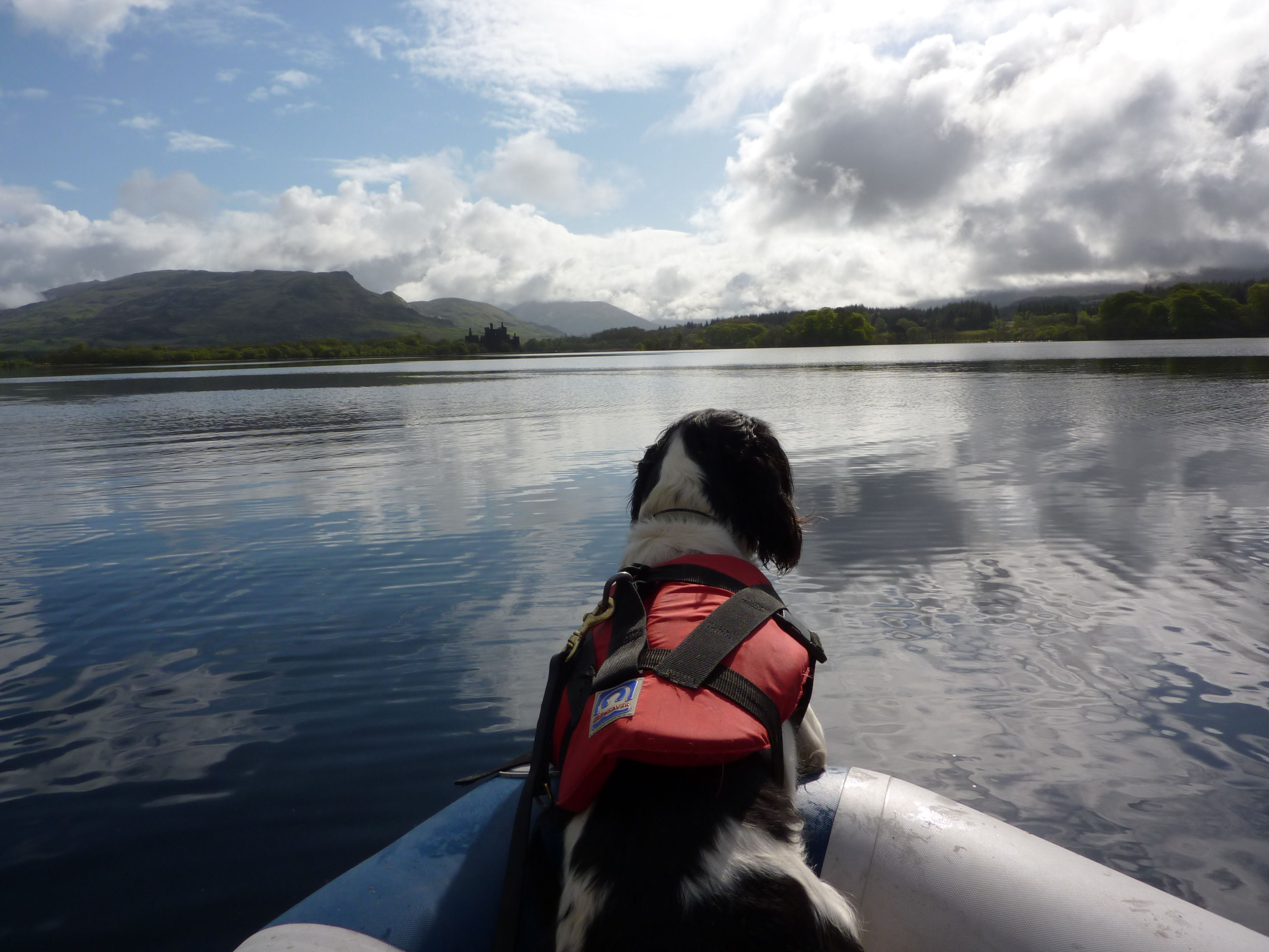 NSARDA Drowned Victim Search Dog at work